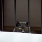 Katzen-20160312_0010
