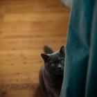 Katzen-20161015_0011