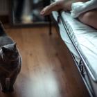 Katzen-20161015_0012