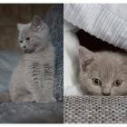 Katzen-20170108_0002