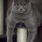 Katzen-20170108_0007