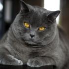 Katzen-20170108_0009